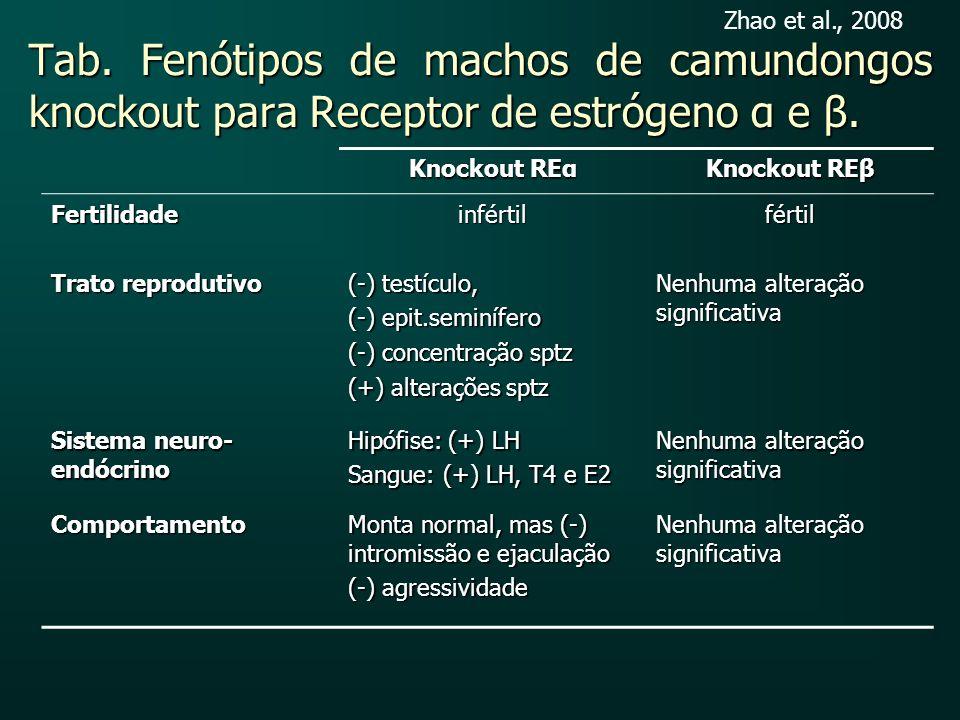 Zhao et al., 2008 Tab. Fenótipos de machos de camundongos knockout para Receptor de estrógeno α e β.