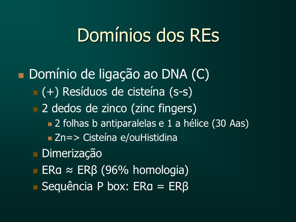 Domínios dos REs Domínio de ligação ao DNA (C)