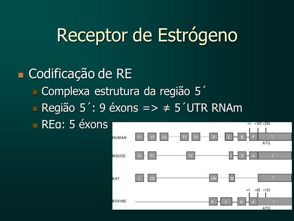 Receptor de Estrógeno Codificação de RE