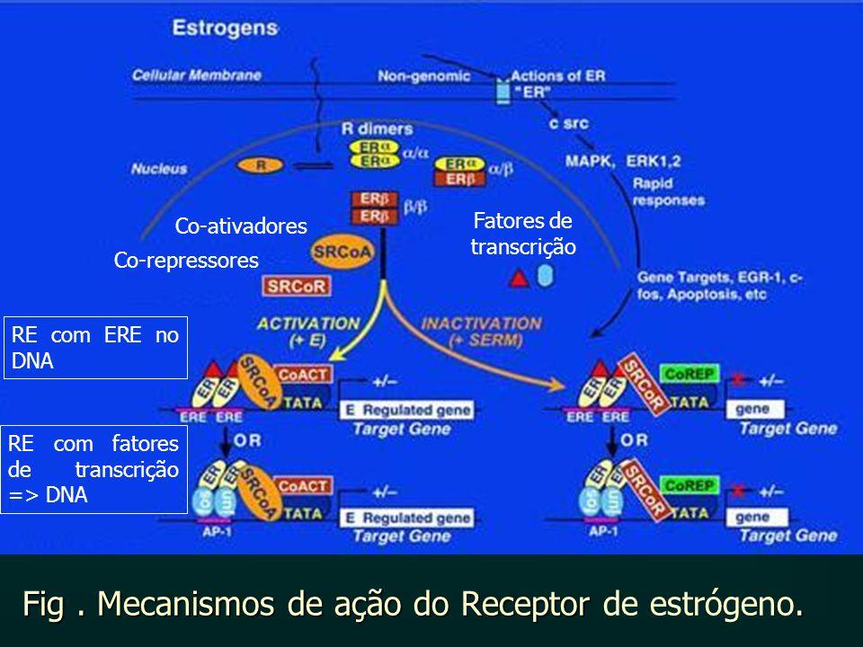 Fig . Mecanismos de ação do Receptor de estrógeno.