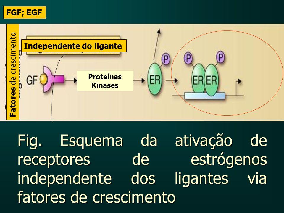 FGF; EGF Independente do ligante. Fatores de crescimento. Proteínas Kinases.