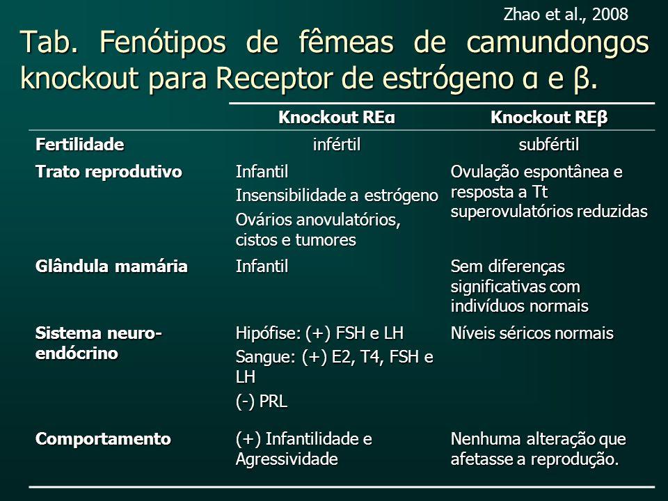 Zhao et al., 2008 Tab. Fenótipos de fêmeas de camundongos knockout para Receptor de estrógeno α e β.