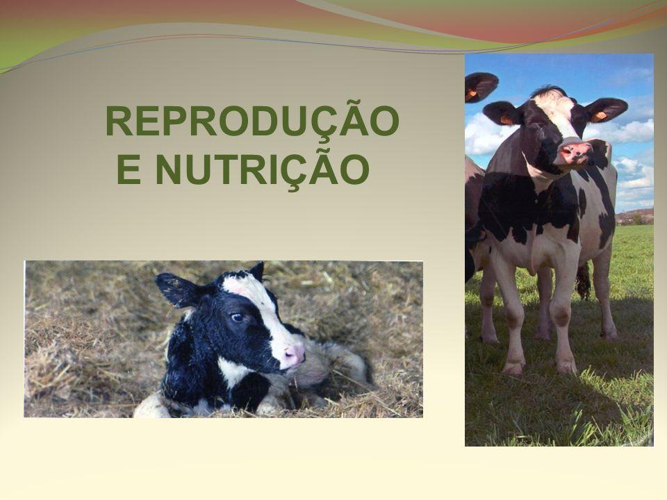 REPRODUÇÃO E NUTRIÇÃO