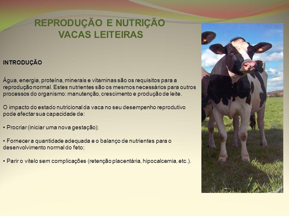 REPRODUÇÃO E NUTRIÇÃO VACAS LEITEIRAS