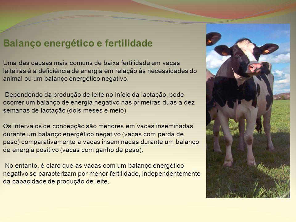 Balanço energético e fertilidade