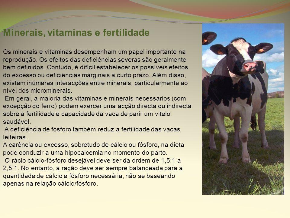Minerais, vitaminas e fertilidade