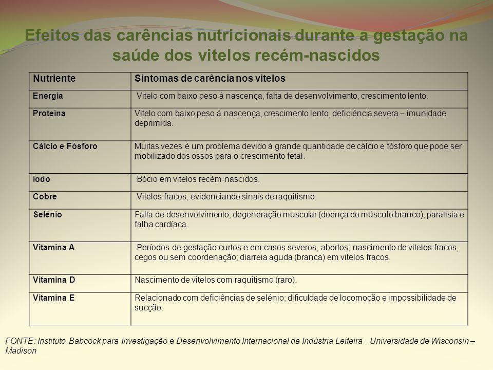 Efeitos das carências nutricionais durante a gestação na saúde dos vitelos recém-nascidos