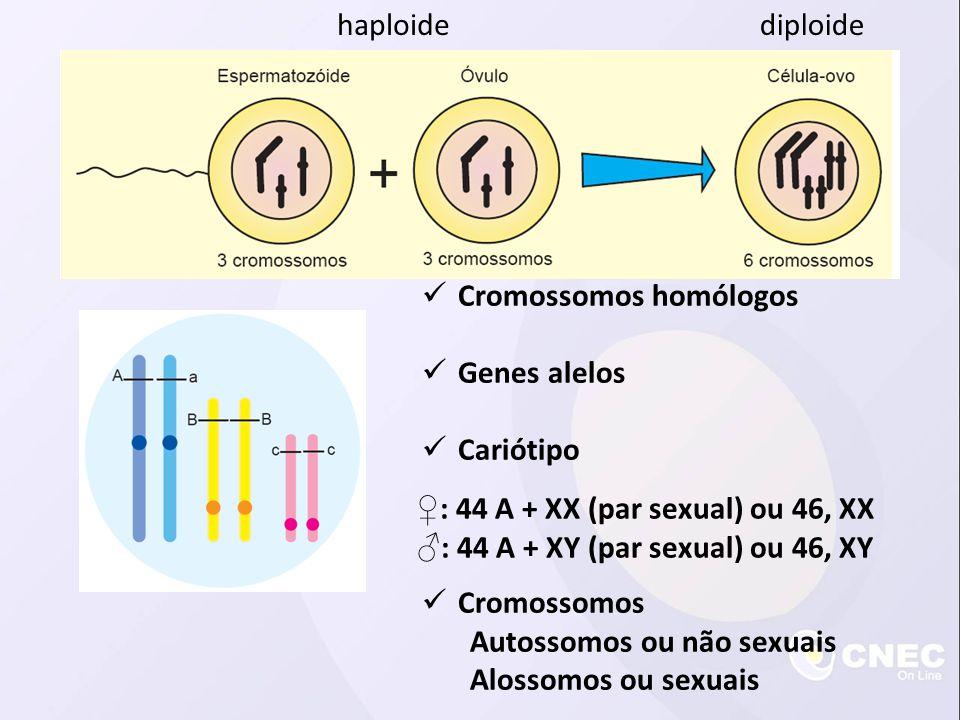 Cromossomos homólogos Genes alelos Cariótipo