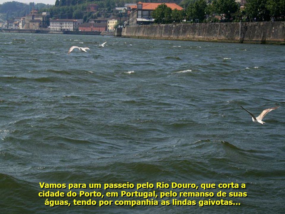 IMG_2329 - PORTUGAL - PORTO - GAIVOTAS-700