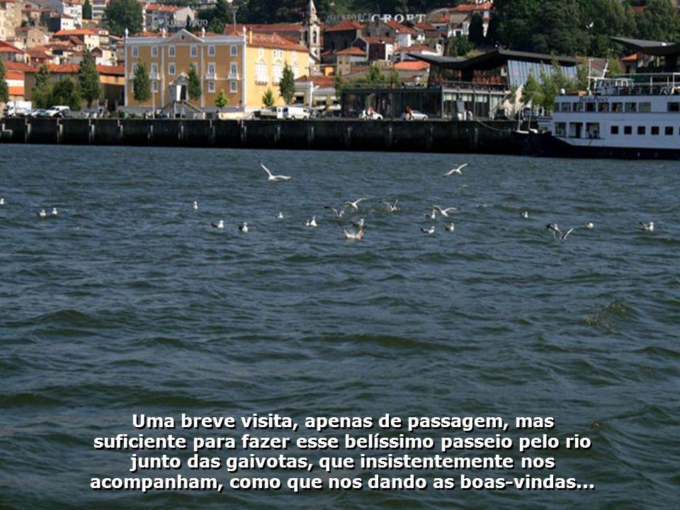 IMG_2376 - PORTUGAL - PORTO - GAIVOTAS-700