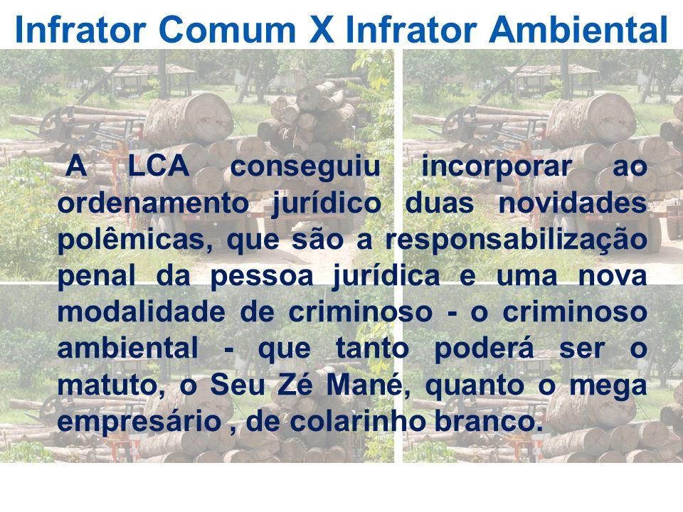 Infrator Comum X Infrator Ambiental