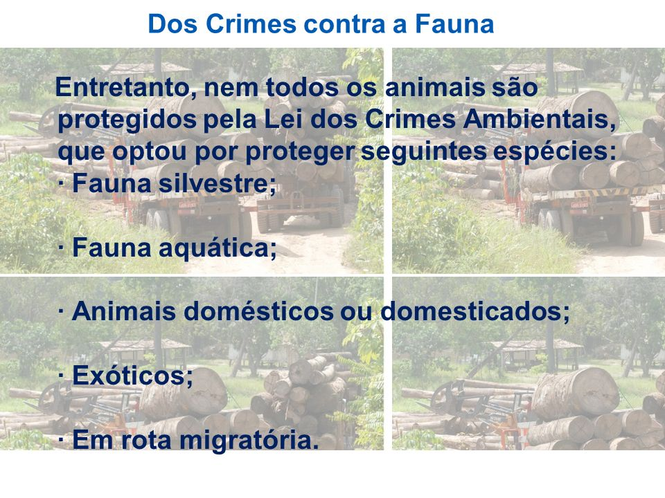 Dos Crimes contra a Fauna