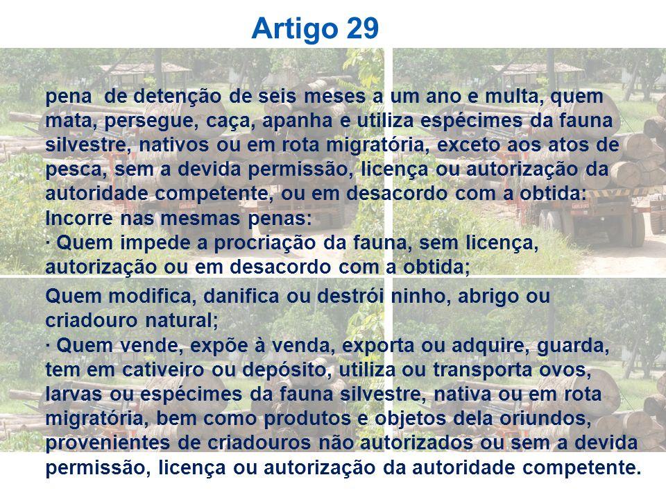 Artigo 29