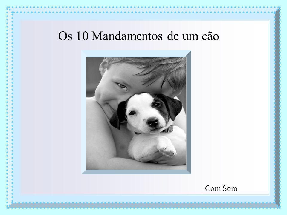 Os 10 Mandamentos de um cão