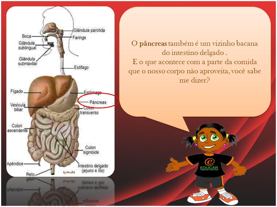 O pâncreas também é um vizinho bacana do intestino delgado .
