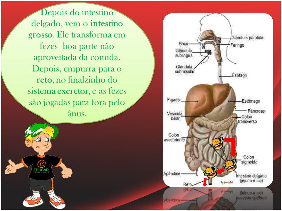 Depois do intestino delgado, vem o intestino grosso