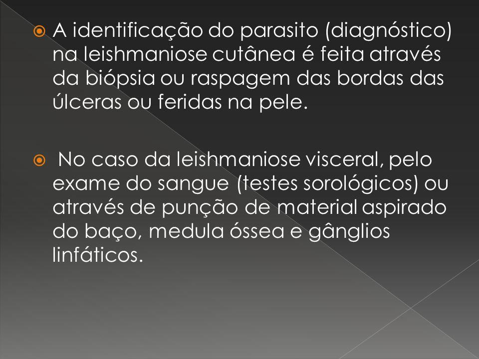 A identificação do parasito (diagnóstico) na leishmaniose cutânea é feita através da biópsia ou raspagem das bordas das úlceras ou feridas na pele.