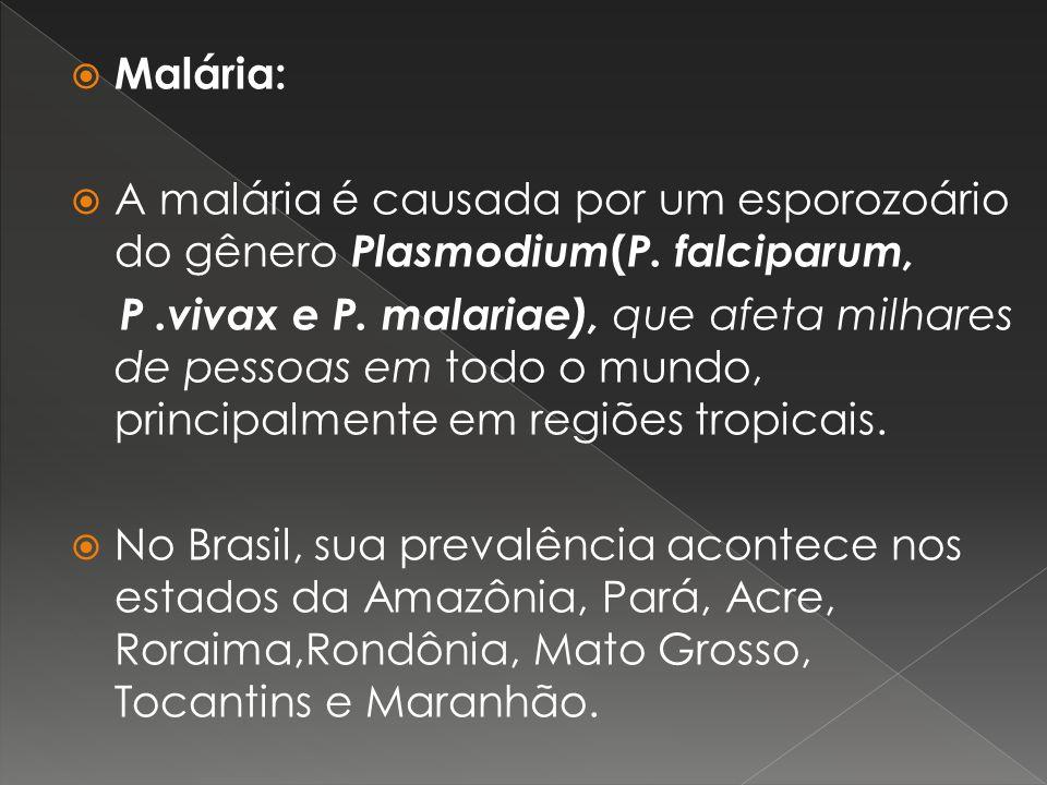 Malária: A malária é causada por um esporozoário do gênero Plasmodium(P. falciparum,