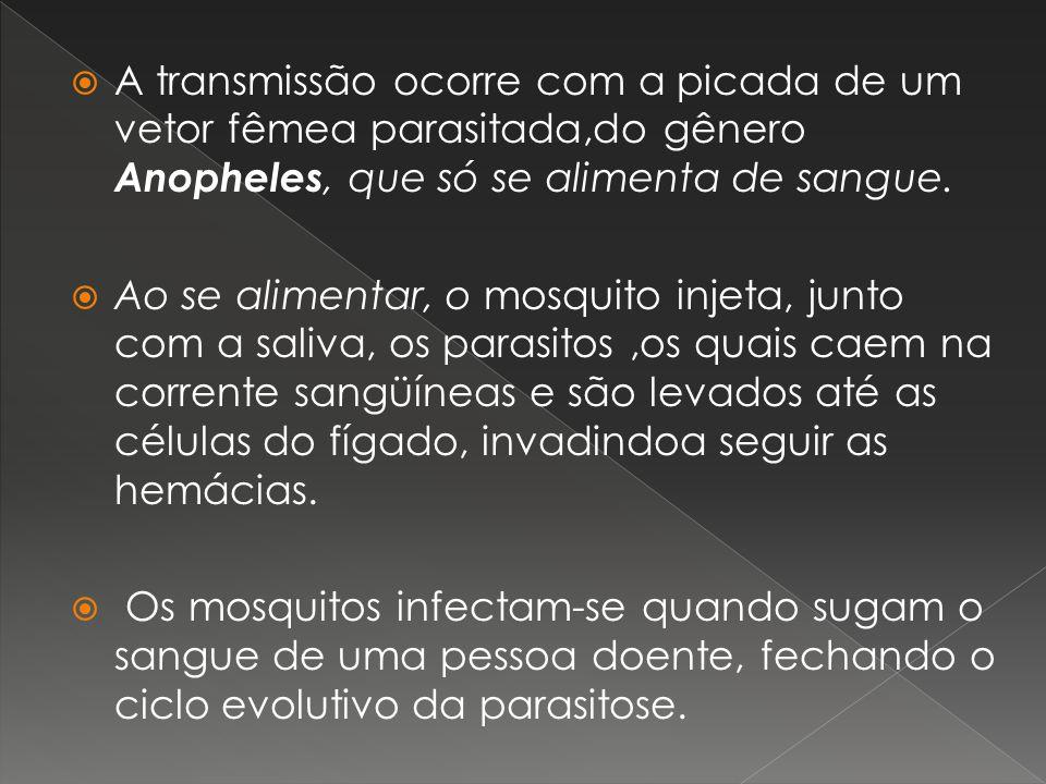 A transmissão ocorre com a picada de um vetor fêmea parasitada,do gênero Anopheles, que só se alimenta de sangue.