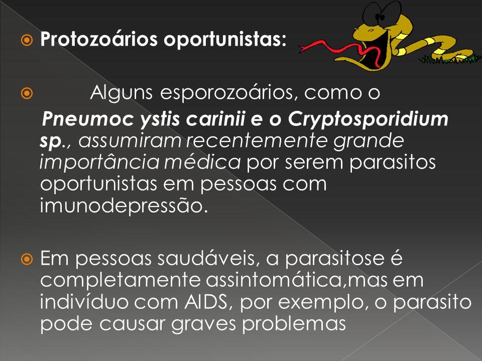 Protozoários oportunistas: