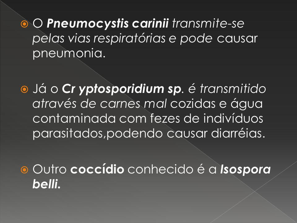 O Pneumocystis carinii transmite-se pelas vias respiratórias e pode causar pneumonia.