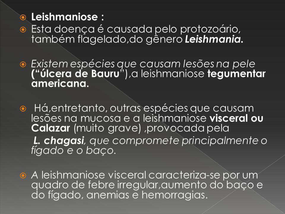 Leishmaniose :Esta doença é causada pelo protozoário, também flagelado,do gênero Leishmania.