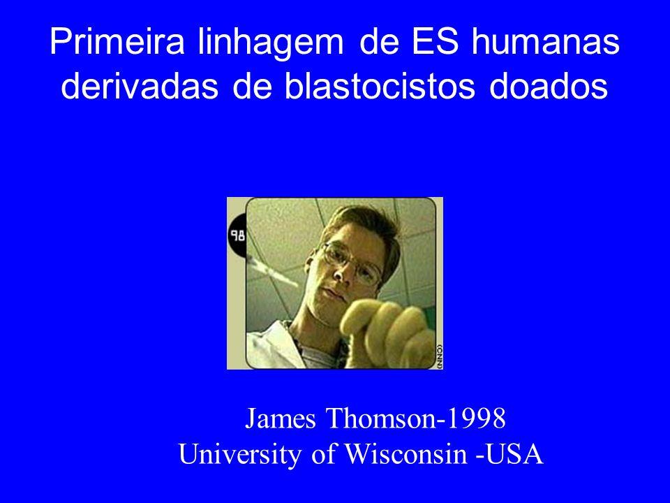 Primeira linhagem de ES humanas derivadas de blastocistos doados