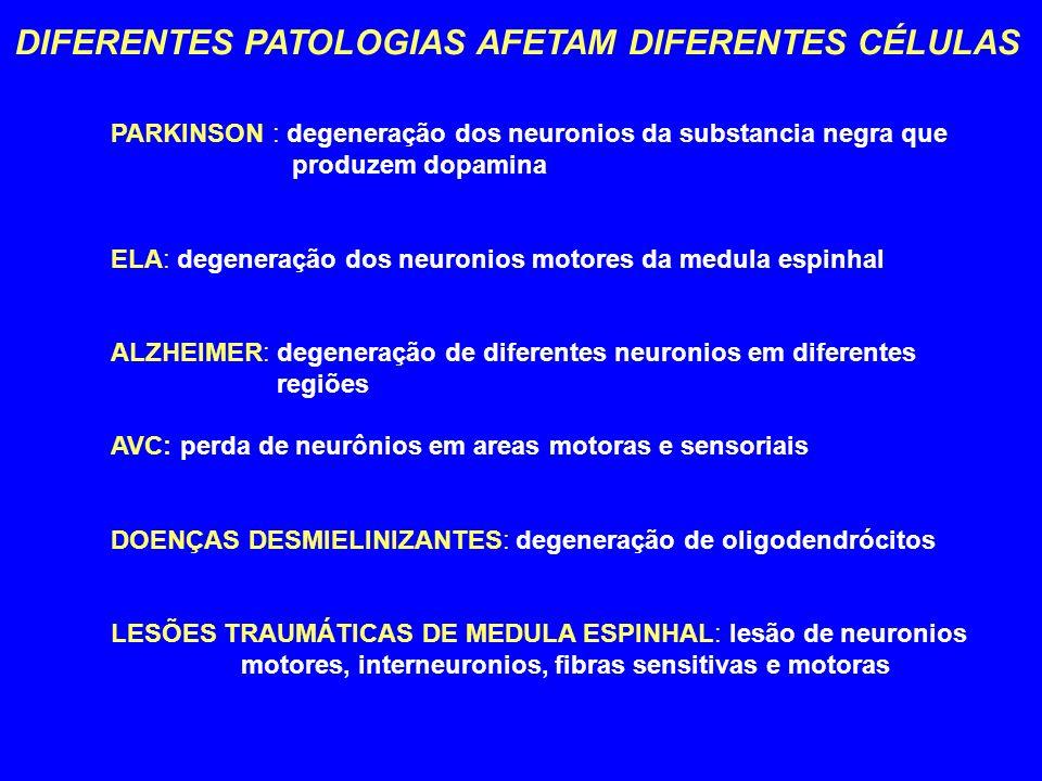 DIFERENTES PATOLOGIAS AFETAM DIFERENTES CÉLULAS