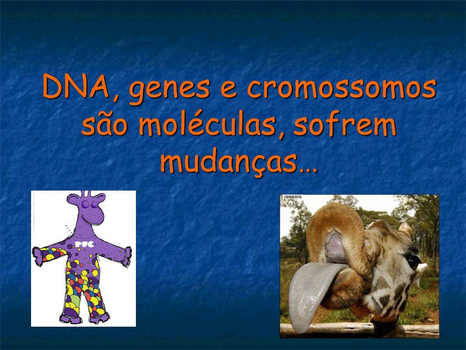 DNA, genes e cromossomos são moléculas, sofrem mudanças…
