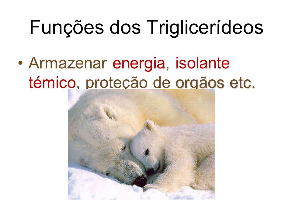 Funções dos Triglicerídeos