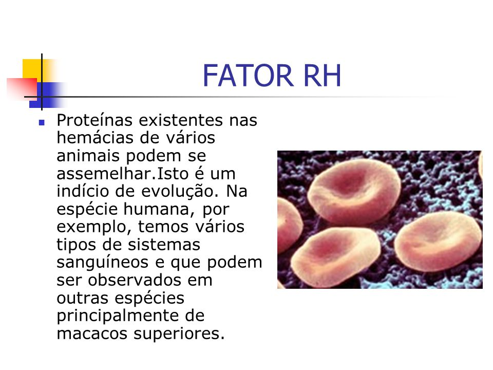 FATOR RH