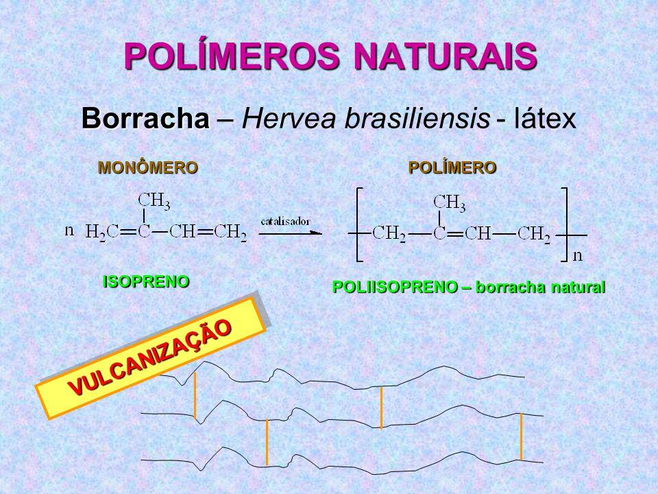 POLIISOPRENO – borracha natural