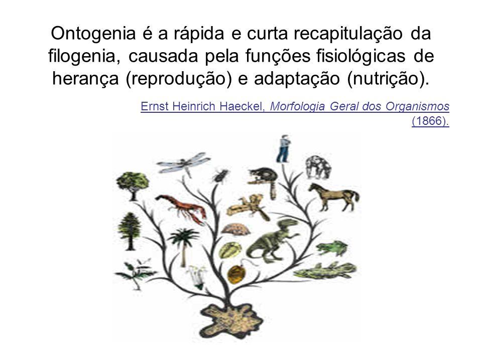 Ontogenia é a rápida e curta recapitulação da filogenia, causada pela funções fisiológicas de herança (reprodução) e adaptação (nutrição).