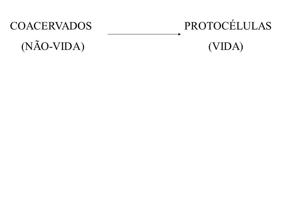 COACERVADOS PROTOCÉLULAS