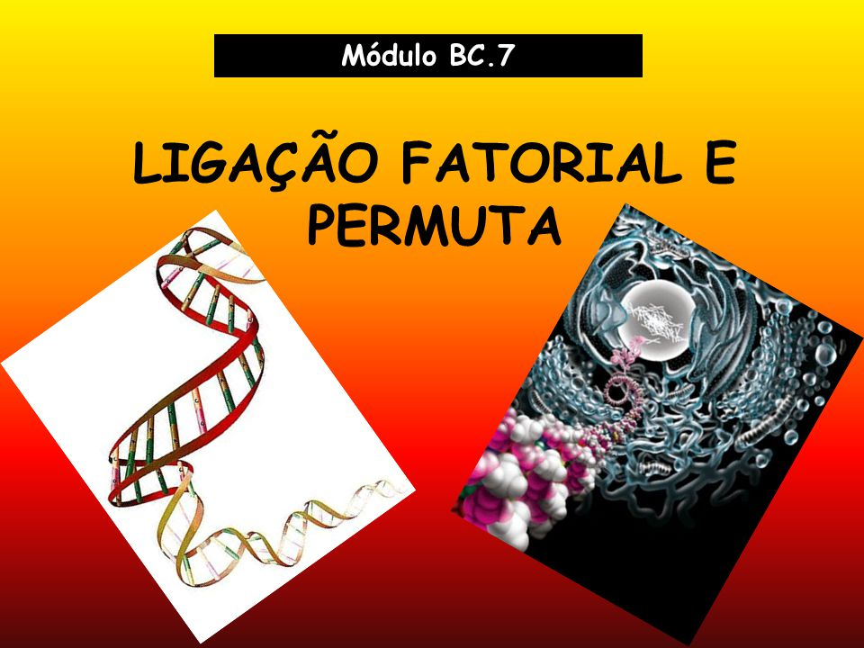 LIGAÇÃO FATORIAL E PERMUTA