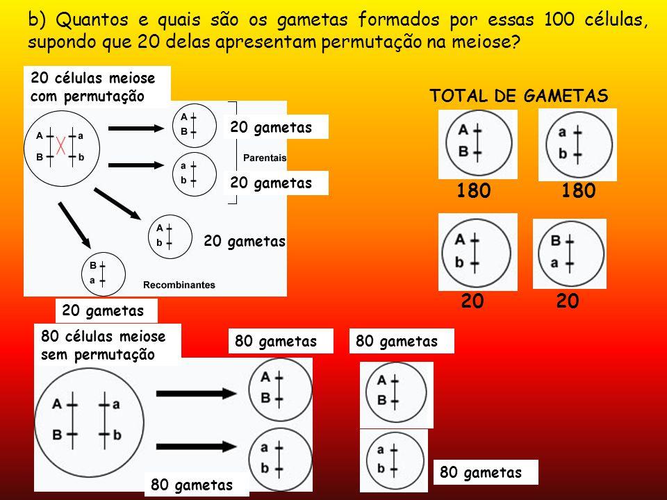 b) Quantos e quais são os gametas formados por essas 100 células, supondo que 20 delas apresentam permutação na meiose