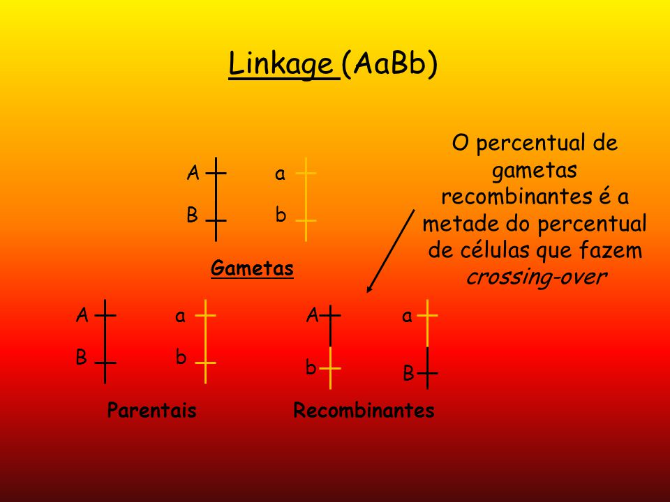 Linkage (AaBb) O percentual de gametas recombinantes é a metade do percentual de células que fazem crossing-over.