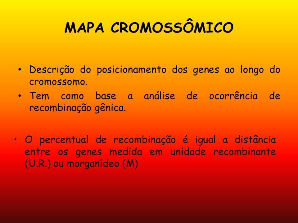 MAPA CROMOSSÔMICO Descrição do posicionamento dos genes ao longo do cromossomo. Tem como base a análise de ocorrência de recombinação gênica.