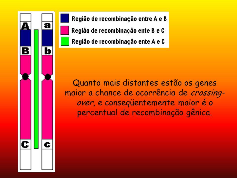 Quanto mais distantes estão os genes maior a chance de ocorrência de crossing-over, e conseqüentemente maior é o percentual de recombinação gênica.