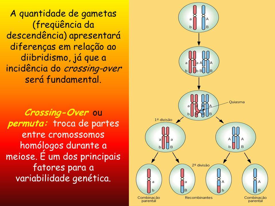 A quantidade de gametas (freqüência da descendência) apresentará diferenças em relação ao diibridismo, já que a incidência do crossing-over será fundamental.