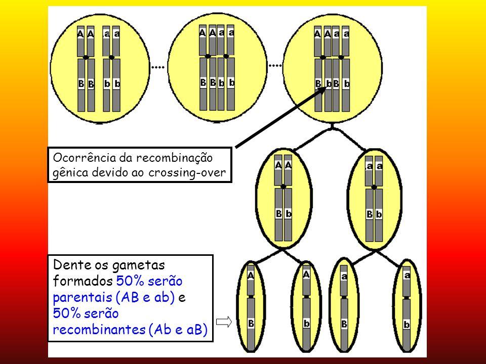 Ocorrência da recombinação gênica devido ao crossing-over