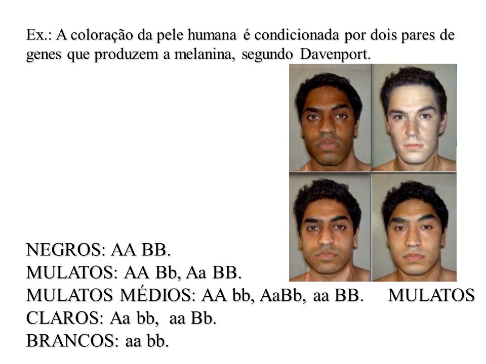 MULATOS MÉDIOS: AA bb, AaBb, aa BB. MULATOS CLAROS: Aa bb, aa Bb.