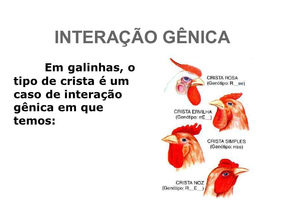 INTERAÇÃO GÊNICA Em galinhas, o tipo de crista é um caso de interação gênica em que temos: