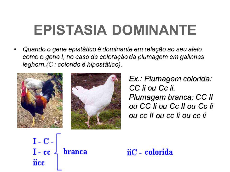 EPISTASIA DOMINANTE