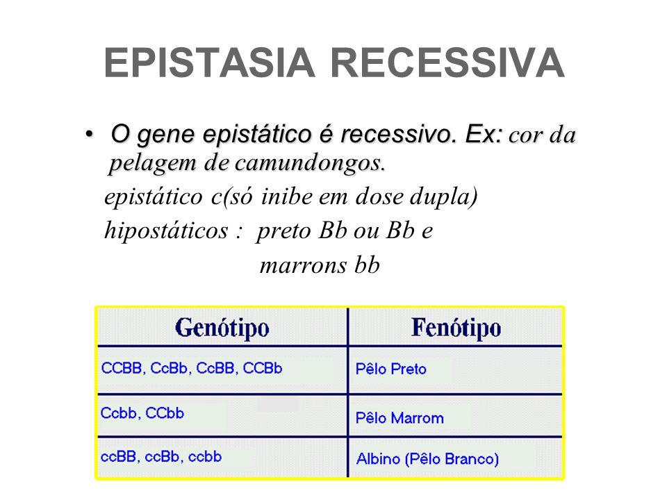 EPISTASIA RECESSIVA O gene epistático é recessivo. Ex: cor da pelagem de camundongos. epistático c(só inibe em dose dupla)