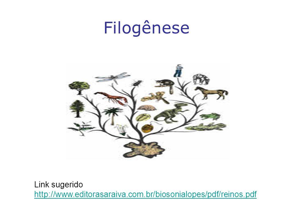 Filogênese Link sugerido