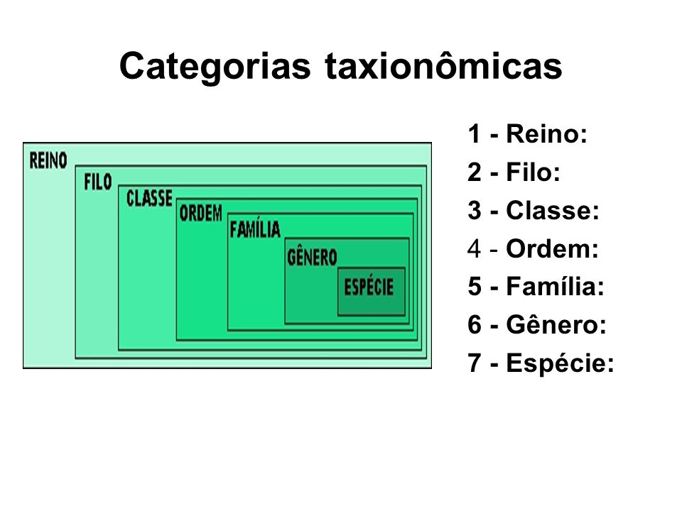 Categorias taxionômicas