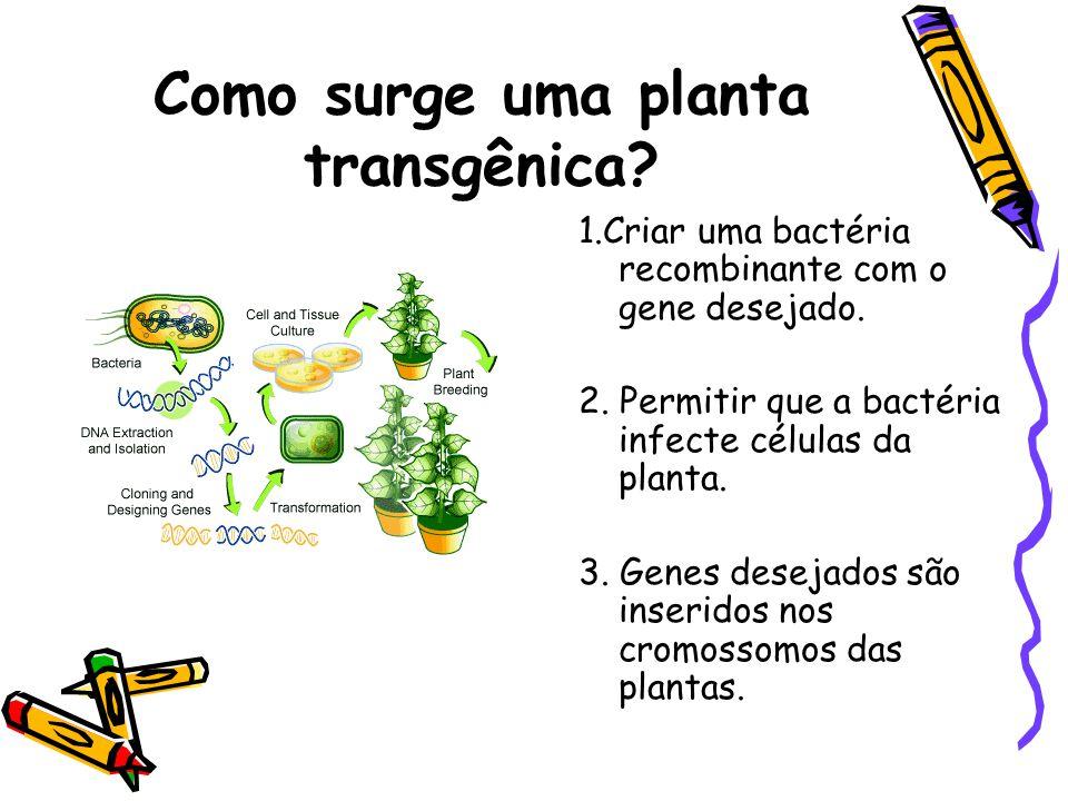 Como surge uma planta transgênica