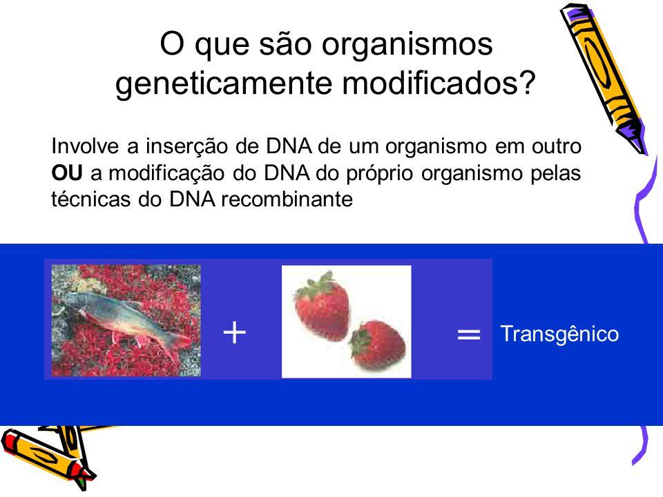 O que são organismos geneticamente modificados
