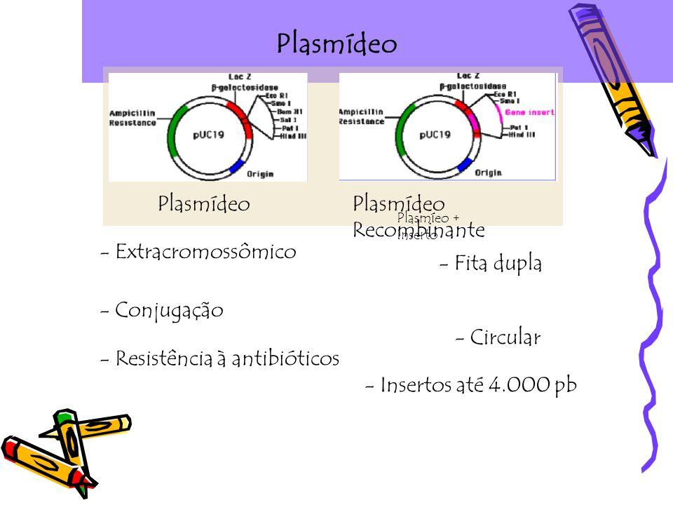 Plasmídeo Plasmídeo Plasmídeo Recombinante - Extracromossômico